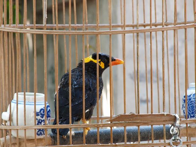 birds (1).jpg
