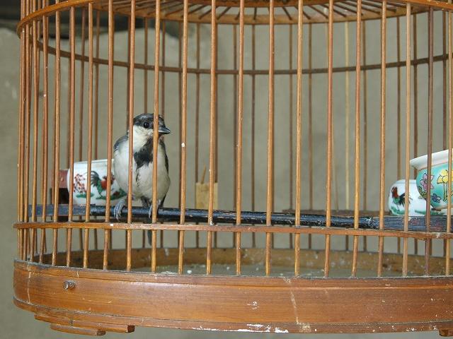 birds (10).jpg