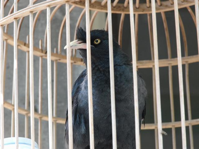 birds (11).jpg