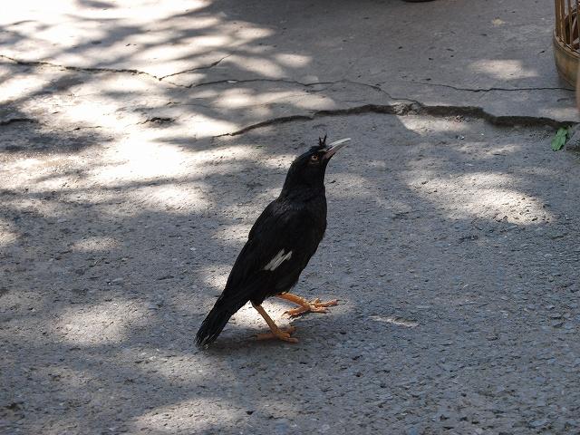 birds (12).jpg
