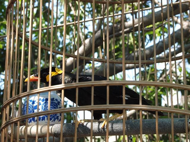 birds (2).jpg