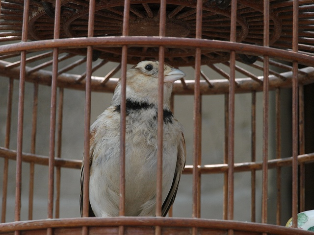 birds (5).jpg