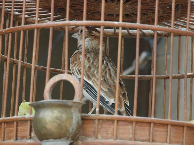 birds (6).jpg