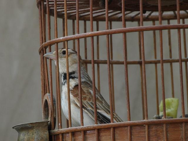 birds (7).jpg