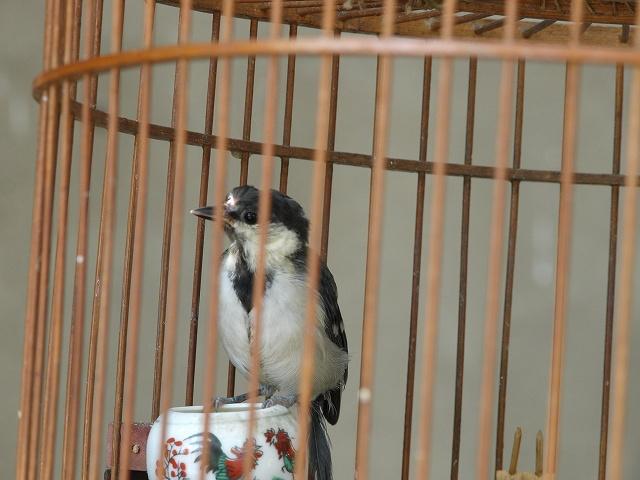 birds (9).jpg